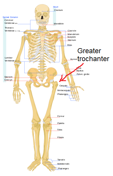 image of greater trochanter