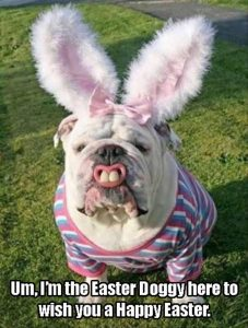 Happy Easter Dog at BodyFit Physiotherapy Howick